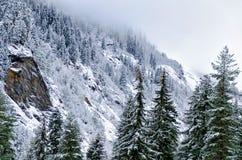 Paesaggio della montagna di inverno - una vista delle montagne, coperta di pino e di neve, una nuvola cade alla cima Fotografie Stock Libere da Diritti
