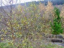 paesaggio della montagna di lingua gallese degli alberi e dei cespugli con le grandi pietre Fotografia Stock Libera da Diritti