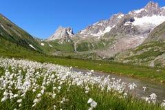Paesaggio della montagna e fiori alpini Immagine Stock