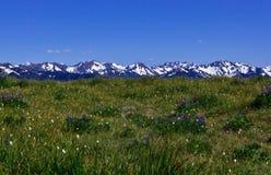 Paesaggio della montagna e fiori selvaggi Fotografia Stock