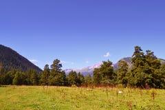 Paesaggio della montagna nel pomeriggio Immagini Stock