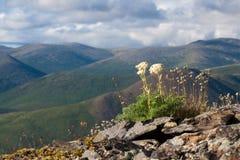Paesaggio della montagna nell'area di Magadan Fotografia Stock Libera da Diritti
