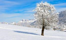 Paesaggio della montagna nell'inverno con neve Fotografia Stock