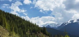 Paesaggio della montagna nelle alpi, di estate Fotografia Stock Libera da Diritti