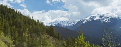 Paesaggio della montagna nelle alpi, di estate Immagini Stock