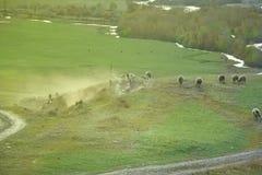Paesaggio della montagna, pecora del gregge Fotografie Stock
