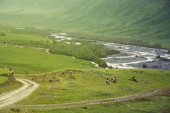 Paesaggio della montagna, pecora del gregge Fotografia Stock