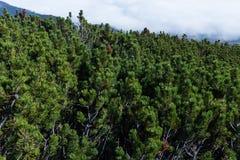 Paesaggio della montagna Picchi di alta montagna Valle verde della montagna Paesaggio scenico Posto per ricreazione attiva e fare Fotografia Stock