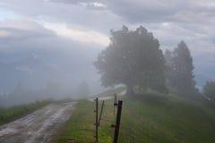 Paesaggio della montagna poco tempo dopo la pioggia di molla Alpi slovene Forest Road, albero venerabile, nebbia, nuvole e picchi Fotografia Stock