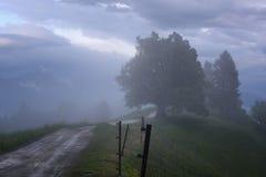 Paesaggio della montagna poco tempo dopo la pioggia di molla Alpi slovene Forest Road, albero venerabile, nebbia, nuvole e picchi Immagine Stock Libera da Diritti