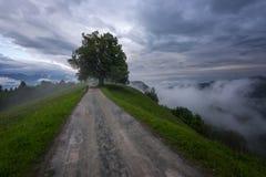 Paesaggio della montagna poco tempo dopo la pioggia di molla Alpi slovene Forest Road, albero venerabile, nebbia, nuvole e picchi Immagini Stock Libere da Diritti