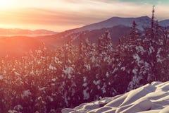 Paesaggio della montagna Scena di inverno Luce solare d'ardore fantastica Immagine Stock