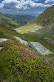 Paesaggio della montagna Strada di elevata altitudine nei Carpathians Immagini Stock