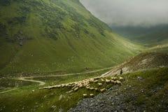 Paesaggio della montagna Strada di elevata altitudine nei Carpathians Fotografia Stock