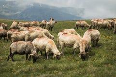 Paesaggio della montagna Strada di elevata altitudine nei Carpathians Fotografia Stock Libera da Diritti