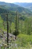 Paesaggio della montagna sul passaggio Chike-Taman Montagna Altai La Siberia occidentale Immagini Stock Libere da Diritti