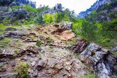 Paesaggio della montagna Vista dal basso degli alberi verdi che crescono sulla scogliera ripida Fotografia Stock Libera da Diritti