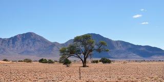 Paesaggio della Namibia, Africa fotografia stock libera da diritti