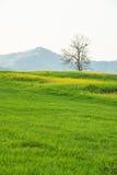Paesaggio della natura Fotografie Stock Libere da Diritti