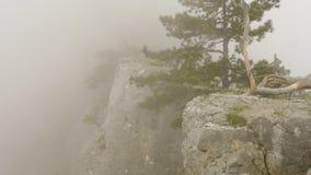 Paesaggio della natura con la conifera verde sola sul bordo della scogliera in nebbia video d archivio