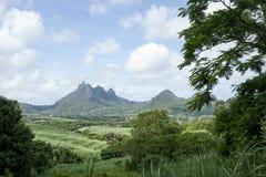 Paesaggio della natura del giacimento della canna da zucchero Fotografie Stock Libere da Diritti