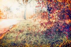 Paesaggio della natura di autunno con la strada ed il fogliame adorabile dell'albero di caduta Fotografia Stock Libera da Diritti