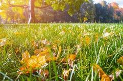 Paesaggio della natura di autunno con le foglie di autunno sulla priorità alta nel parco Fotografia Stock Libera da Diritti