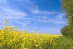 Paesaggio della natura di estate di agricoltura Fotografia Stock