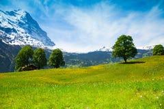 Paesaggio della natura di estate vicino alle alpi Fotografia Stock
