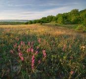 Paesaggio della natura della montagna Fotografie Stock Libere da Diritti