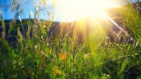 Paesaggio della natura - prato alpino Fotografie Stock Libere da Diritti