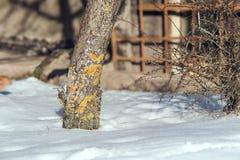 Paesaggio della natura della primavera con neve di fusione fotografia stock