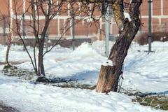 Paesaggio della natura della primavera con neve di fusione immagini stock libere da diritti