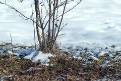 Paesaggio della natura della primavera con neve di fusione immagine stock