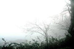 Paesaggio della nebbia Fotografie Stock