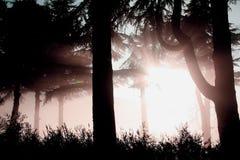 Paesaggio della nebbia Immagine Stock Libera da Diritti
