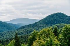 Paesaggio della nebbia di Forest With Evergreen Trees In della montagna carpatica immagine stock