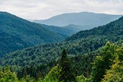 Paesaggio della nebbia di Forest With Evergreen Trees In della montagna carpatica immagine stock libera da diritti