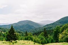 Paesaggio della nebbia di Forest With Evergreen Trees In della montagna carpatica immagini stock