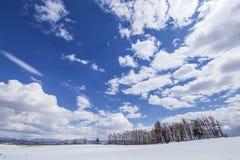 Paesaggio della neve con cielo blu e le nuvole bianche in Biei Hokkaido, Giappone fotografia stock