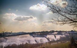 Paesaggio della neve con l'albero Fotografia Stock