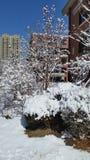 Paesaggio della neve-covred Immagine Stock