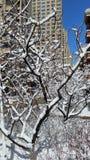 Paesaggio della neve-covred Fotografia Stock Libera da Diritti