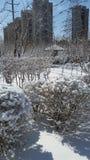 Paesaggio della neve-covred immagine stock libera da diritti