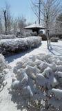 Paesaggio della neve-covred immagini stock libere da diritti