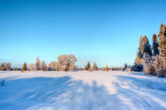 Paesaggio della neve di inverno, alte paludi, Belgio Immagine Stock