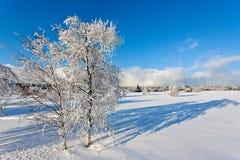 Paesaggio della neve di inverno, alte paludi, Belgio Fotografia Stock Libera da Diritti