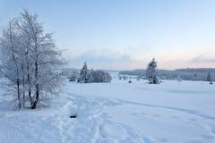 Paesaggio della neve di inverno, alte paludi, Belgio Immagini Stock Libere da Diritti
