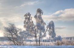 Paesaggio della neve di inverno, alte paludi, Belgio Immagini Stock