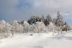 Paesaggio della neve di inverno, alte paludi, Belgio Fotografie Stock Libere da Diritti